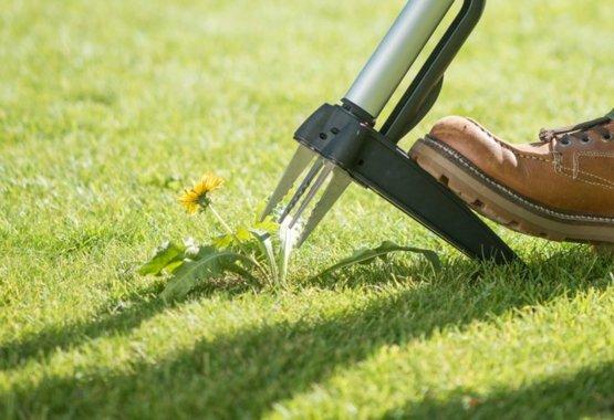 Egy tökéletes megoldás a gyep környezetbarát gyomtalanításához