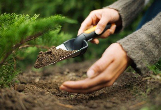 Segítse új növényeit már a kezdetektől